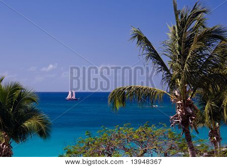 Boat Sails Between Palm Trees