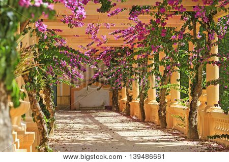beautiful flowers among the columns, the arch of flowers, architecture