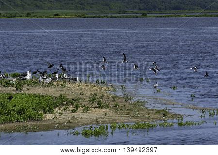 Birds taking off from a small patch of land in the Salt Marshes