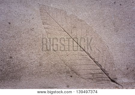 The Imprint of leaf on cement ground