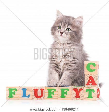 Cute fluffy kitten with playing cubes isolated over white background