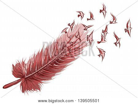 Feather and bird isolated on white background
