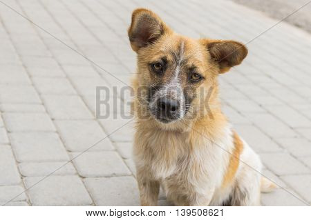 Outdoor portrait of cute mixed breed curious dog