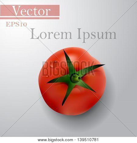 tomato top side background with text vector illustration isolated on white background