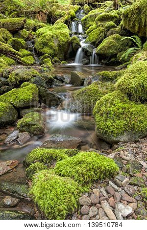 Small cascades along a stream along the Sol Duc Falls trail in Washington.