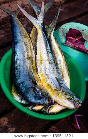 Dorada fish in a bowl fresh marine fish catch on sale