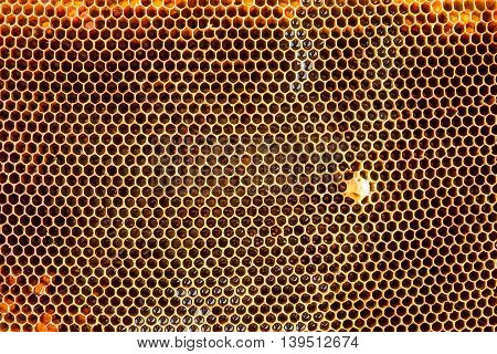 Old pulled honey bee honeycomb. Natural background
