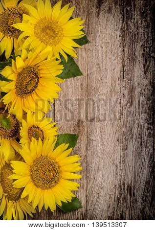 the Sunflowers on wooden background top veiw