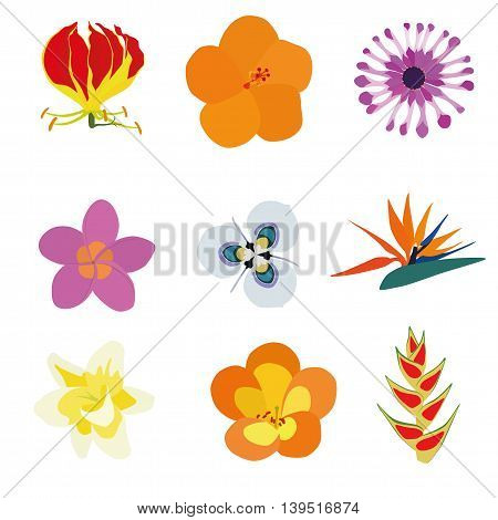 Set of nine exotic flowers containing: Flame Lily Orange Hibiscus African Daisy Plumeria Moraea villosa Bird of Paradise Vanilla Tropical Rhododendron Heliconia Wagneriana.