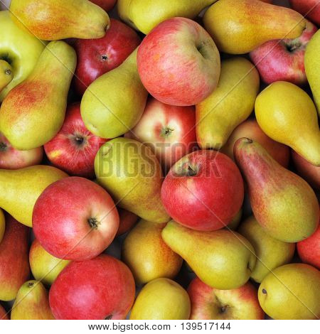Harvest of ripe yellow and red apples and pears
