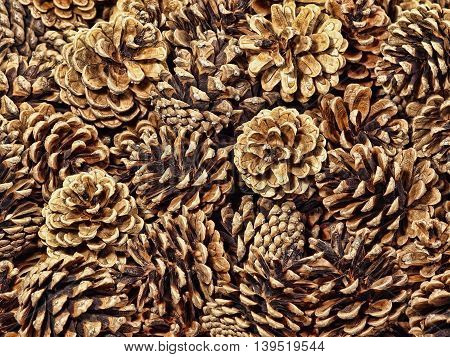 Fir Conifer Cones taken closeup suitable as Nature Background.Top View.Toned image.