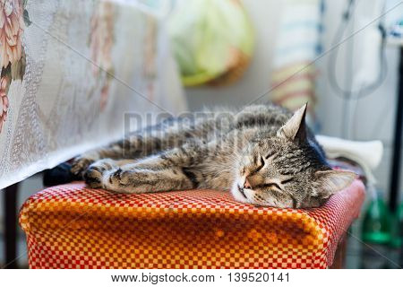 Motley cat sleeps on a rustic kitchen.