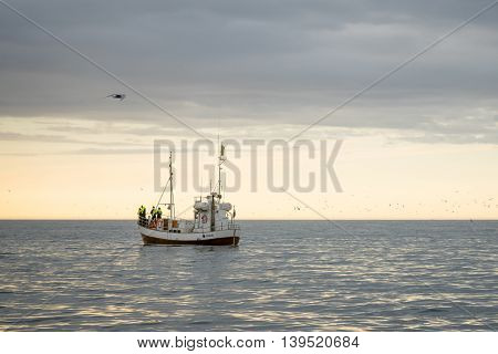 Whale Watching, Near Husavik