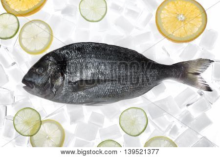 Delicious fresh sea bream fish on ice cubes. Culinary healthy cooking.