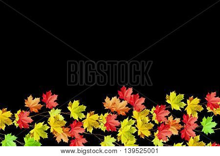 leaves isolated on black background. Golden autumn;