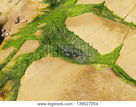 Mossy abstract image at the beach side