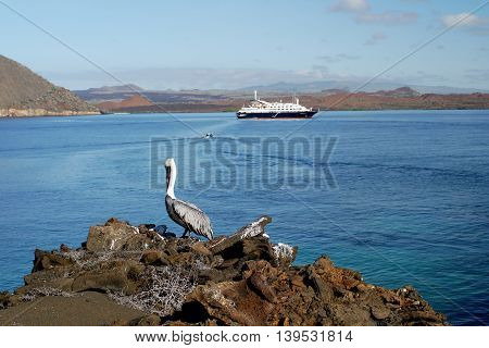 Sullivan Bay with cruise ship and pelican, Galapagos