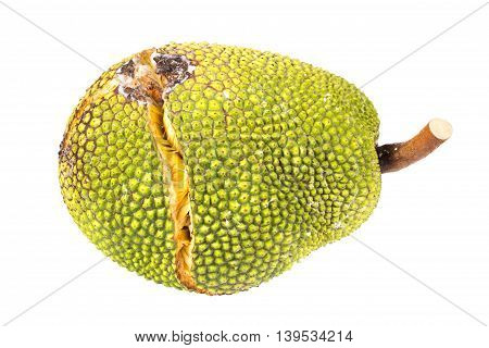 Jackfruit with crack peel isolated on white with path