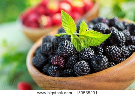 Black raspberries in a bowl in the garden. Closeup