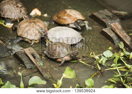 Group of cute turtles rest at canal