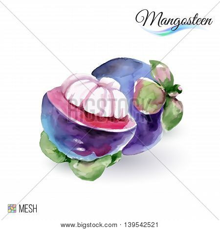 Hand-Drawn Watercolor Painting Mangosteen Fruit on White