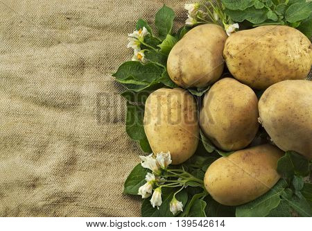 Still life with potatoes on burlap sack background with copy space