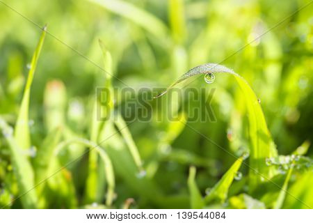 The water drop on the leaf of the grass at grass field with morning sun light