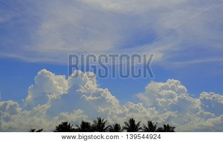 pile of sunlit fluffy, white, cumulus clouds over the tip tops of coconut trees, cirrus clouds higher up in a blue sky, Ranot, Thailand