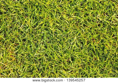 Green grass background seamless view from the top.