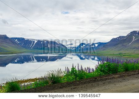 Thingeyri, The West Fjords