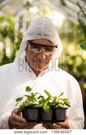 Male scientist in clean suit examining saplings at greenhouse