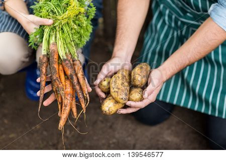 High angle view of gardeners holding harvested carrots and potatoes on field