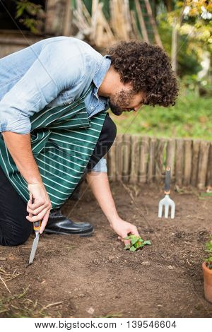 Male gardener kneeling while planting outside greenhouse