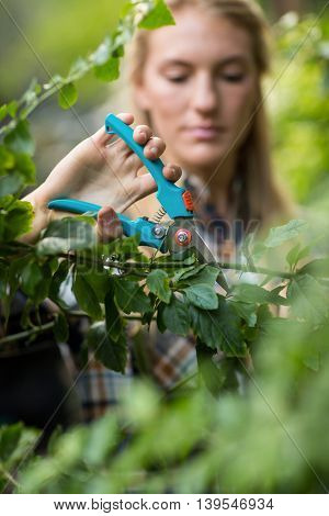 Female gardener pruning plants with shears at greenhouse