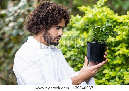 Side view of male scientist examining potted plant at greenhouse