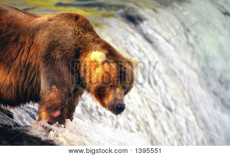 Brown Bear Standing On Brooks Falls