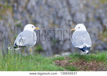 The seagulls sitting on break of a pit.
