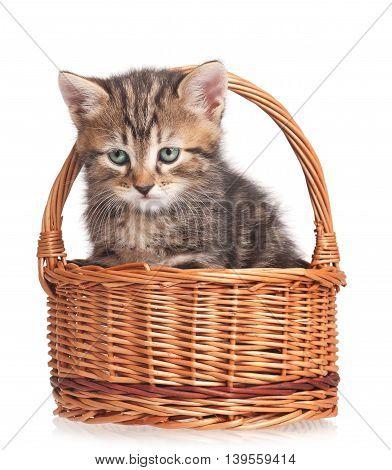 Cute kitten in a wicker basket isolated on white background