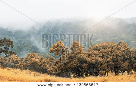 Orange tree and grass in autumn season with far background of big mountain blurred by flying fog after raining and sunrise.