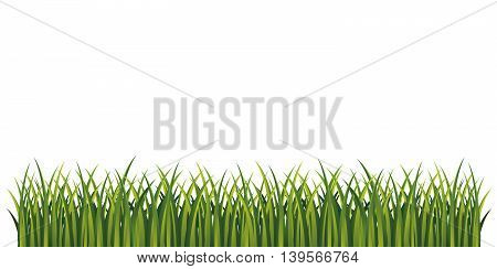 Green grass. Page bottom decoration. Isolated illustration. Vector. Fresh summer grass.