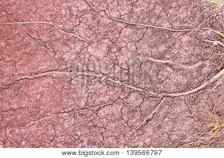 Tree roots background cracked soil drought .
