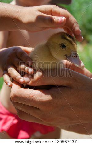 Children's hands iron a duckling close up