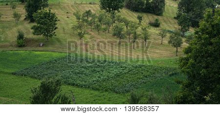 All green, beautiful green field with trees