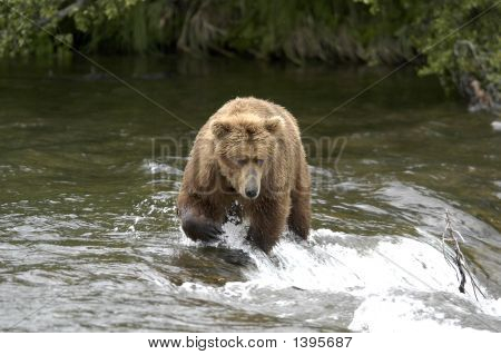 Brown Bear Walking On Top Of Brooks Falls