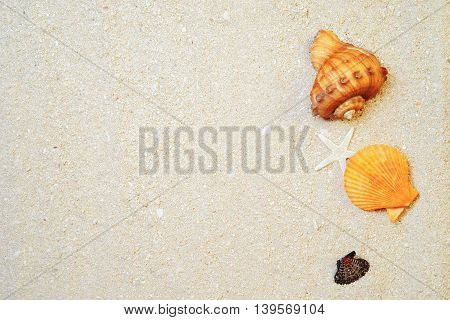 seashells and white sand background for wallpaper