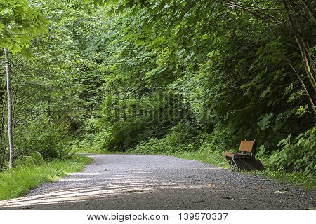 A bench on a path in a forest