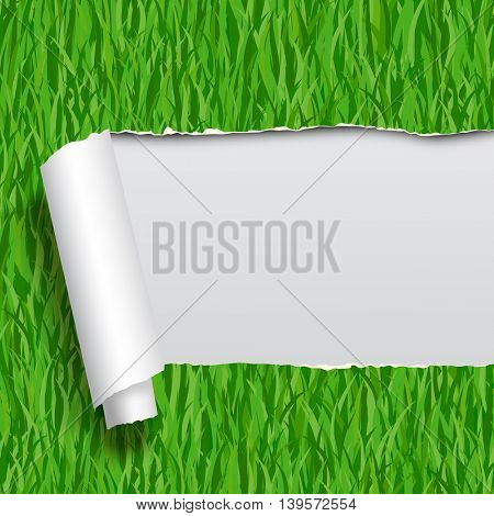 Ripped paper with green grass seamless pattern background. Vector Illustration