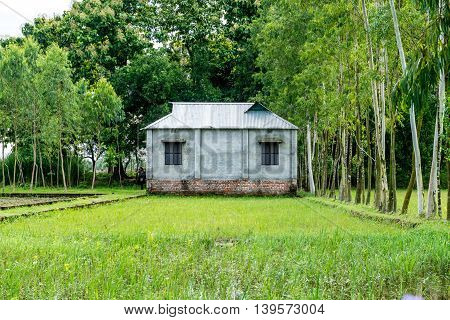 beautiful green house in the field view