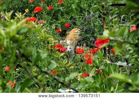 kitten in the grass in the sun