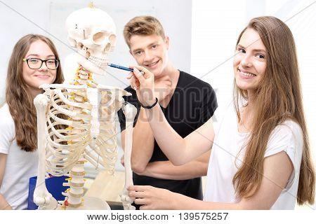 School, anatomy lesson, students watch a model skeleton